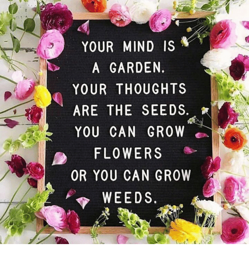 your-mind-is-a-garden-your-thoughts-are-the-seeds-29150615.png